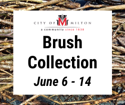 Brush Collection June 6 through 14