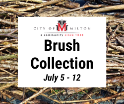 Brush Collection - July 5-12