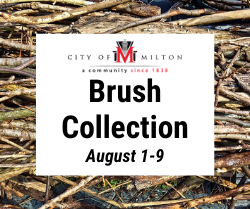 Brush Collection - August 1-9